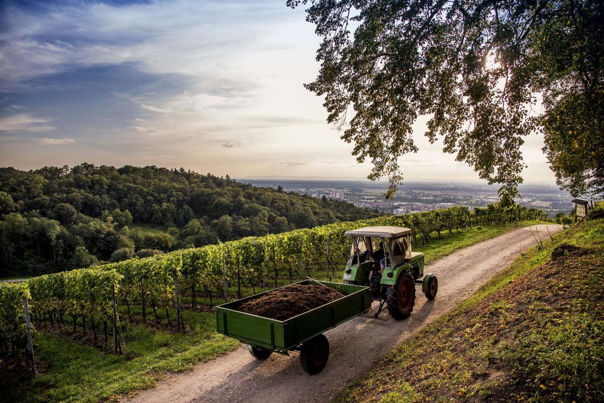 Weinbau an der Bergstraße